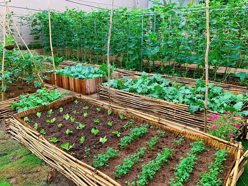 cách chăm vườn đẹp