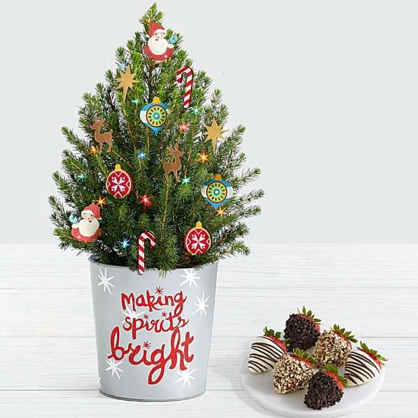 Cây tùng thơm trang trí Noel