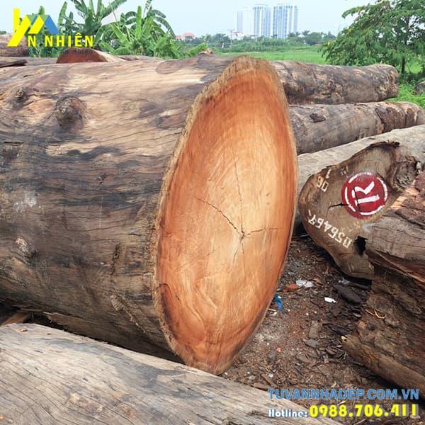 thân cây gỗ lim