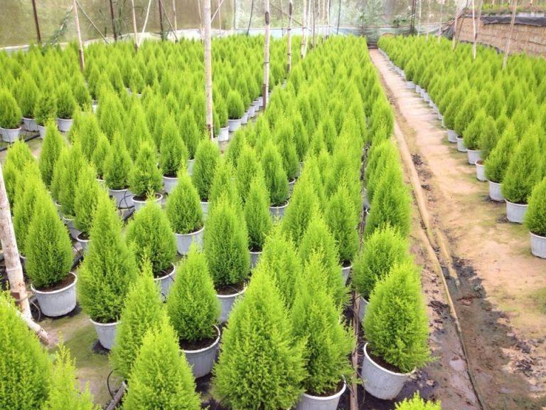 Kỹ thuật trồng cây cảnh